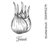fennel root plant. hand drawn... | Shutterstock . vector #534595279