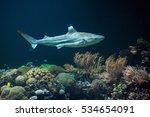 blacktip reef shark ...   Shutterstock . vector #534654091