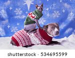 holiday portrait of a pitbull... | Shutterstock . vector #534695599