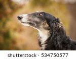Russian Borzoi Dog Profile...