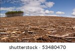 A Pine Forest Is Clearcut Save...