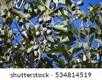 large green gum nuts of... | Shutterstock . vector #534814519