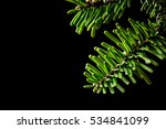Small photo of Closeup of grand fir (Abies grandis) needles in the light against a black background. Grand fir's are often used as Christmas trees.