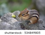 Cute Chipmunk  Tamias  Stuffs...