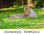 indochinese tiger  or corbett's ... | Shutterstock . vector #534852211