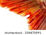 Fish Tail On A White Background