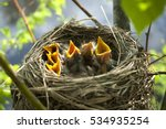 Yellow open mouthed birds in...