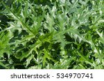 Small photo of Background or Texture of the Green Leaves of Acanthus spinosus (Armed or Spiny Bear's Breech) in a Country Cottage Garden in Rural Devon, England, UK