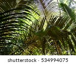 Green Palm Leaves For Background