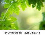green nature with copy space... | Shutterstock . vector #535053145