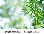 green nature with copy space... | Shutterstock . vector #535053211