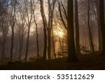 autumn in the forest | Shutterstock . vector #535112629