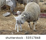 mother sheep nuzzles baby lamb | Shutterstock . vector #53517868