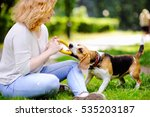 Stock photo young beautiful woman playing with beagle dog in the summer park 535203187