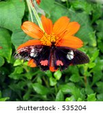 Colorful butterfly on brilliantly colored flower - stock photo