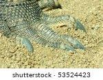 komodo dragon  varanus...   Shutterstock . vector #53524423