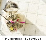 Stock photo siberian breed of cat playing with a feather 535395385