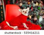 Little White Dog In Red Sweate...