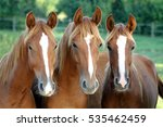 Three Of Horses In Front Of...