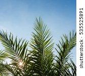 Palm Leaf Against Blue Sky
