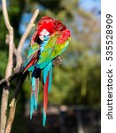 The Green Winged Macaw  Also...
