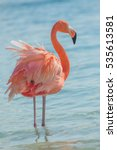 one flamingo on the beach | Shutterstock . vector #535613581