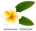 plumeria flower with two leaves ... | Shutterstock .eps vector #535621204