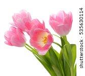 blossom pink tulips   Shutterstock . vector #535630114