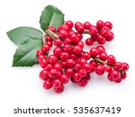 European Holly  Ilex  Leaves...