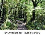 milford track | Shutterstock . vector #535695499