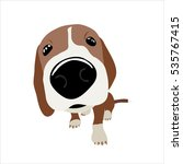 Jack Russell Terrier With A...