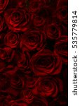 Fresh Red Roses Isolated On A...