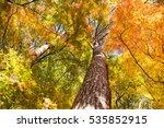 Beautiful Tree In Autumn