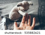 Stock photo little devon rex kitten gives his paw to a human and wants to play friendly kitten close up 535882621