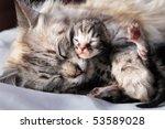 Stock photo cat and her newborn kitten 53589028