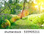 soft focus of flowers blooming... | Shutterstock . vector #535905211