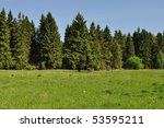 Landscape With Green Forest An...