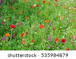 Wildflower Meadow In Bloom