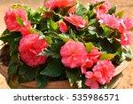 garden of colorful begonia... | Shutterstock . vector #535986571