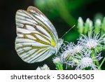 Butterfly  Butterfly In...