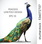 vector design of peacock in low ... | Shutterstock .eps vector #536072737