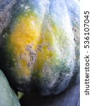 Small photo of An acorn squash.