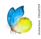 Watercolor Butterfly   Isolate...