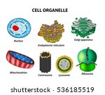 set the cell organelles.... | Shutterstock .eps vector #536185519