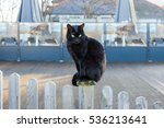 Stock photo a black cat with bright eyes sitting on a wooden white washed picket fence in front of a decking 536213641