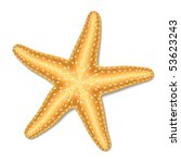 starfish. vector. | Shutterstock .eps vector #53623243