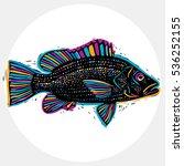 fish species  vector marine... | Shutterstock .eps vector #536252155