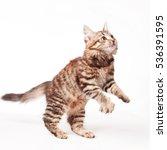 Stock photo little kitten 536391595
