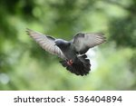 Blur Flying Pigeon With...