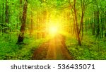 forest with sunlight. the sun... | Shutterstock . vector #536435071